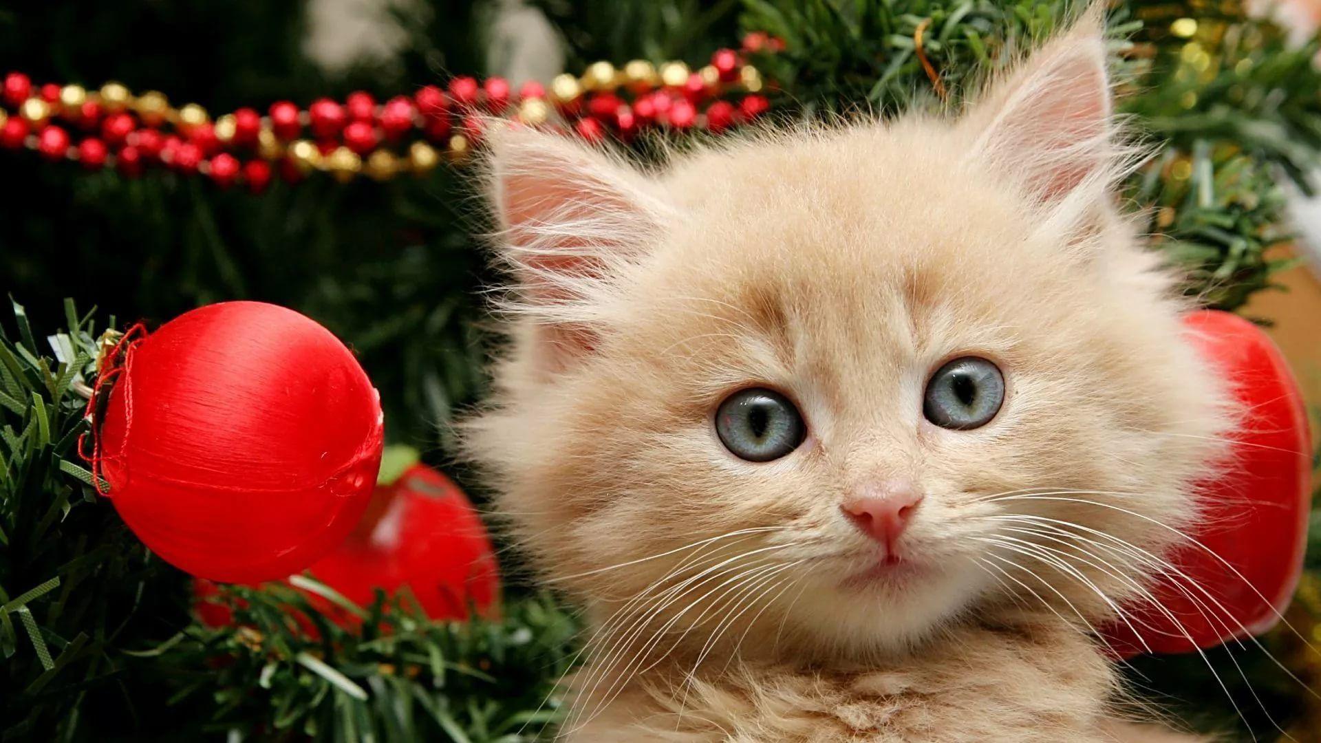Christmas Cat Cool HD Wallpaper