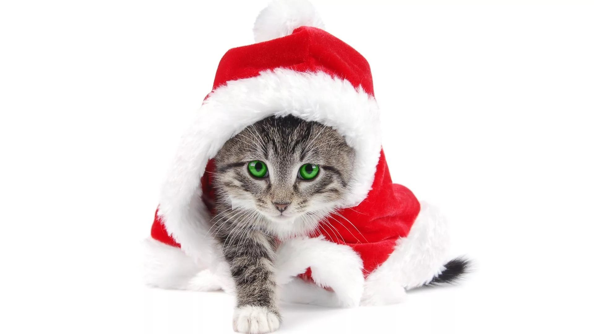 Christmas Cat hd wallpaper download