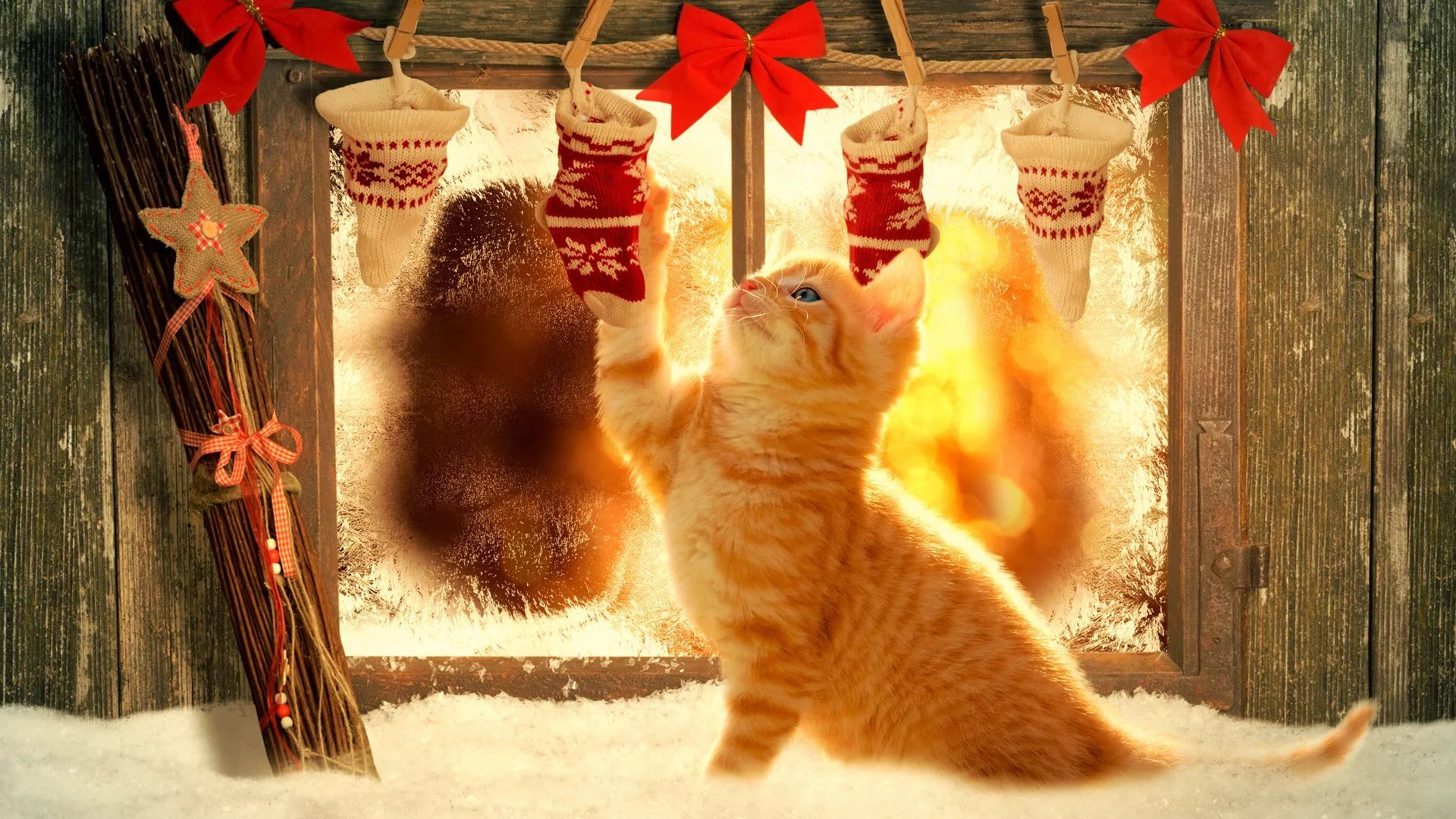 Christmas Cat Wallpaper Picture