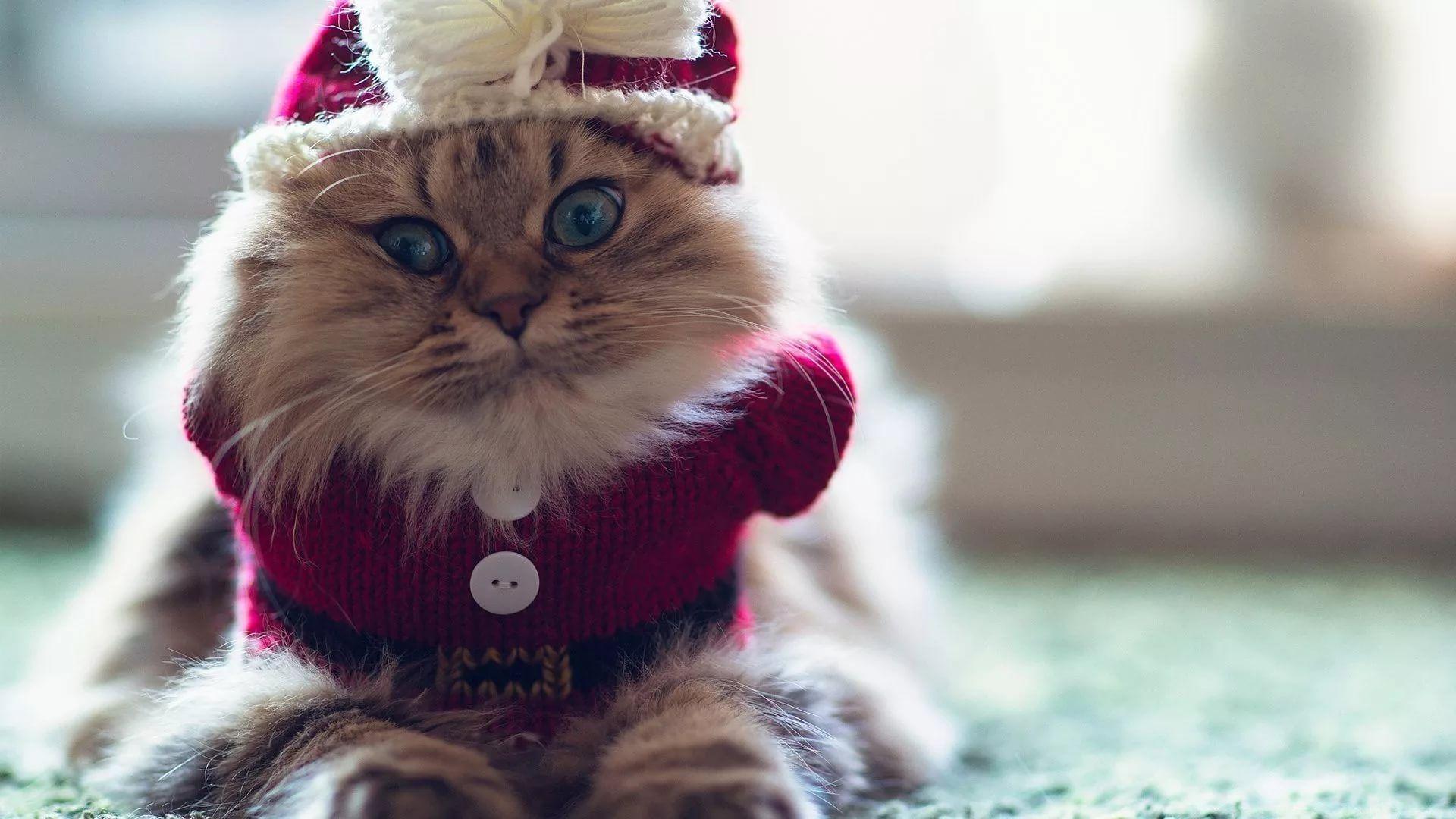 Christmas Cat Free Wallpaper