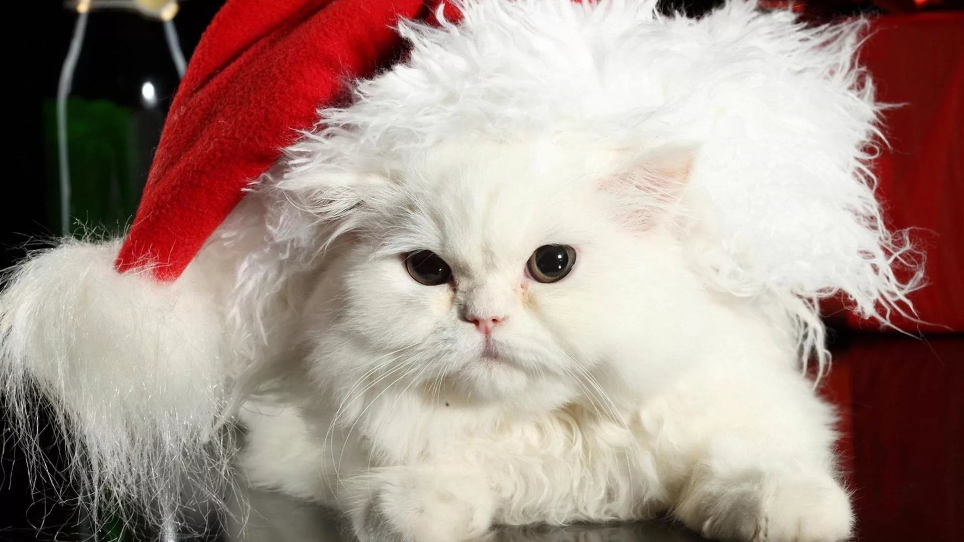 Christmas Cat wallpaper picture hd
