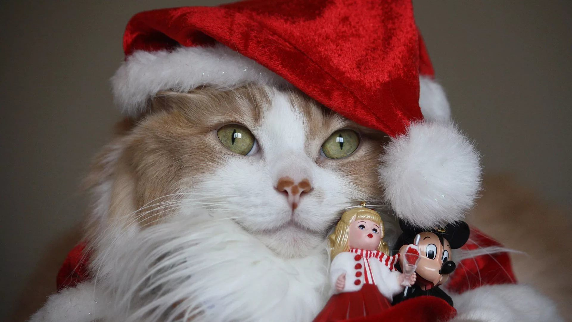 Christmas Cat HD Download