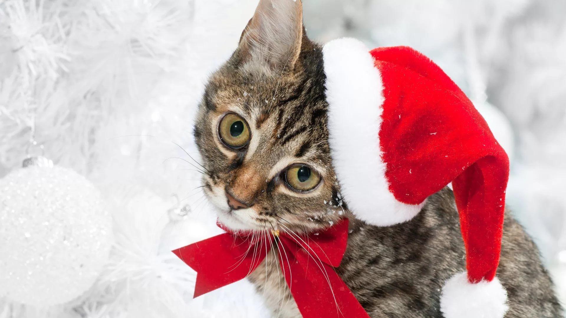 Christmas Cat 1080p Wallpaper