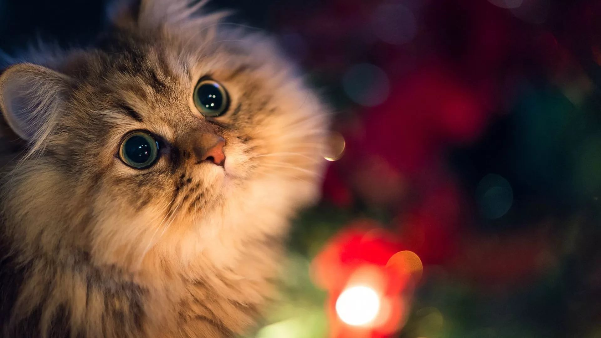 Christmas Cat screen wallpaper
