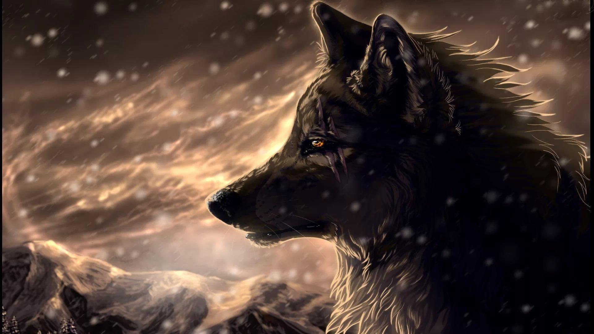 Cool Wolf beautiful wallpaper