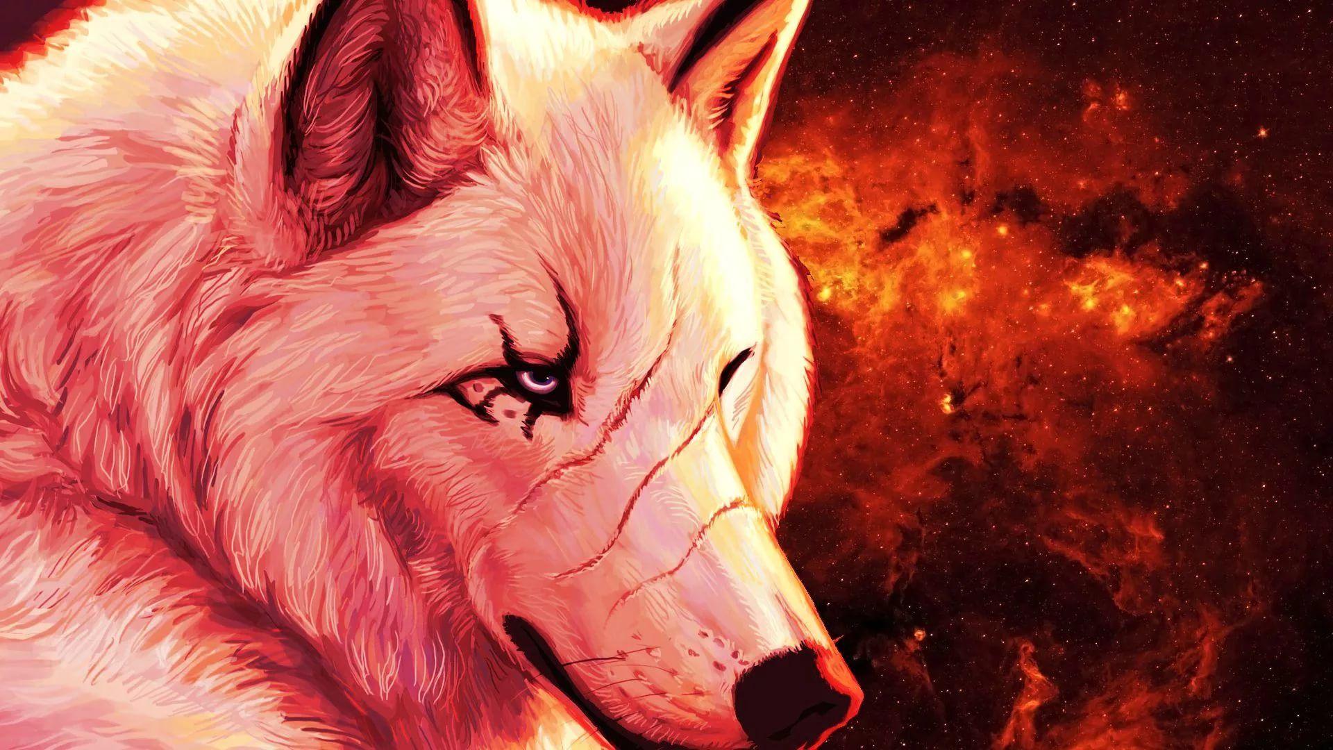 Cool Wolf HD Desktop Wallpaper