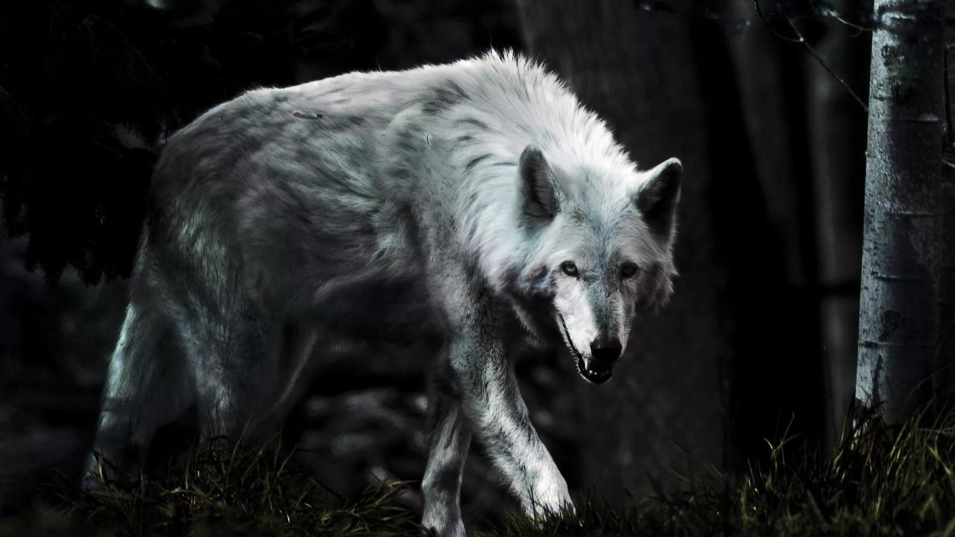 Cool Wolf 1920x1080 wallpaper