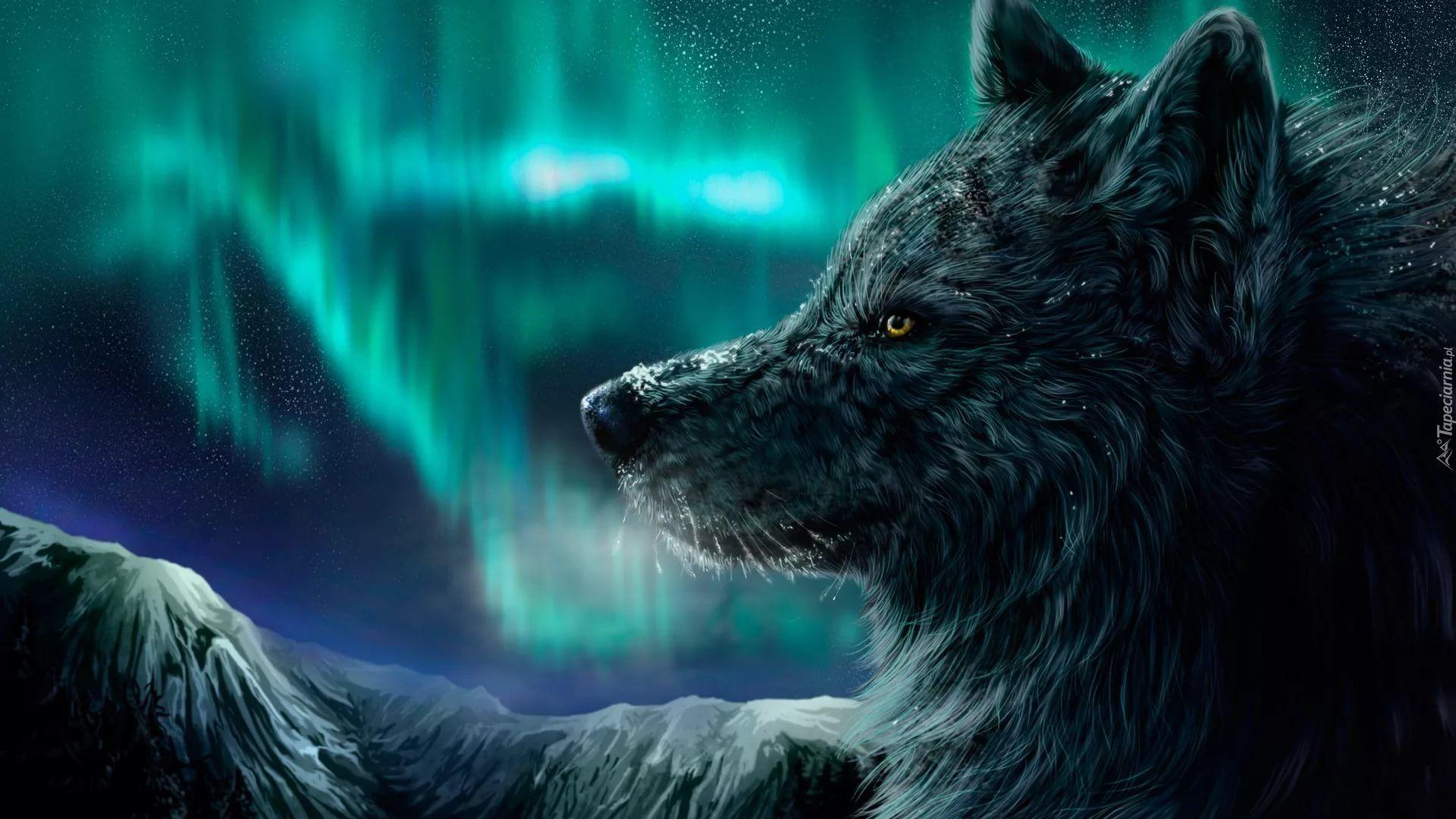 Cool Wolf hd wallpaper 1080