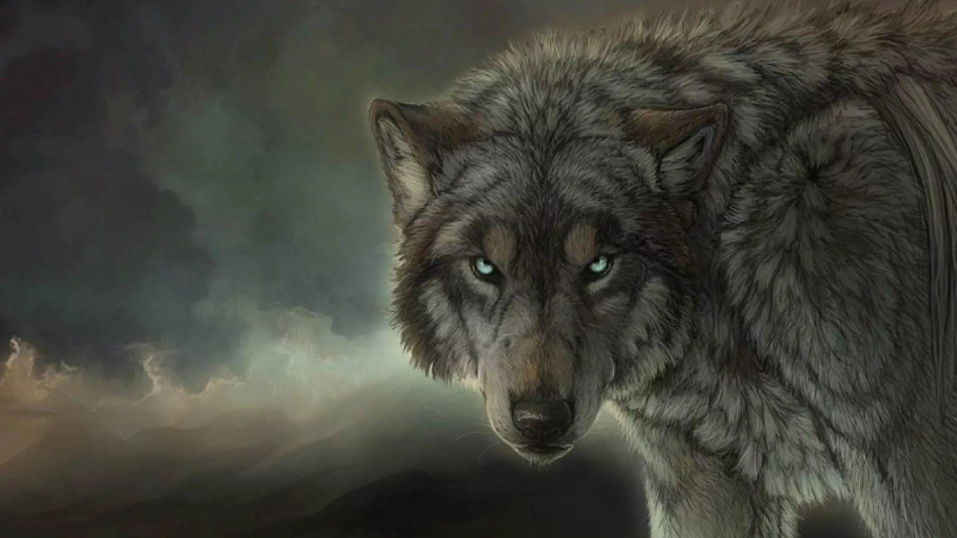 Cool Wolf hd wallpaper download