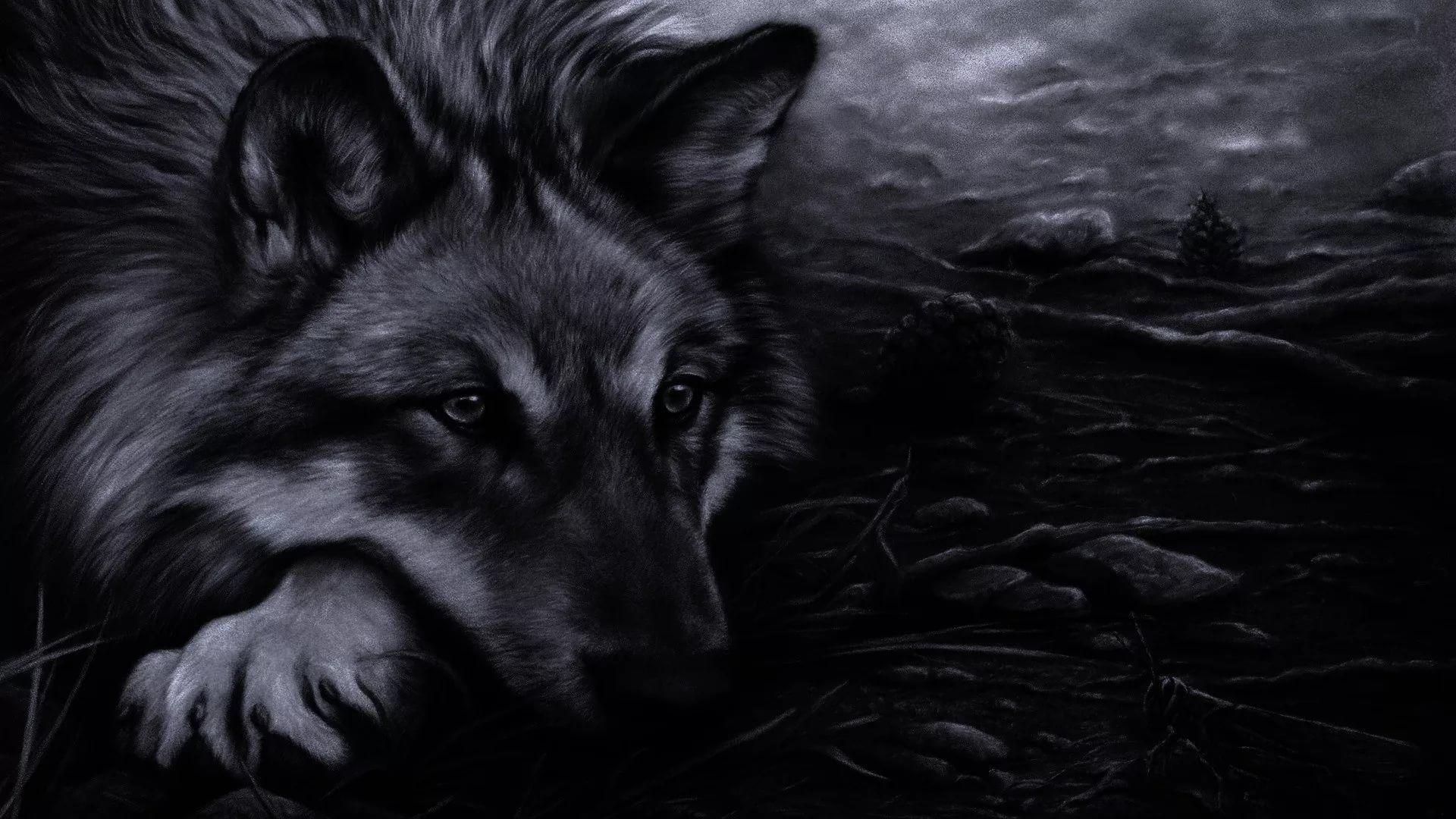 Cool Wolf full hd wallpaper