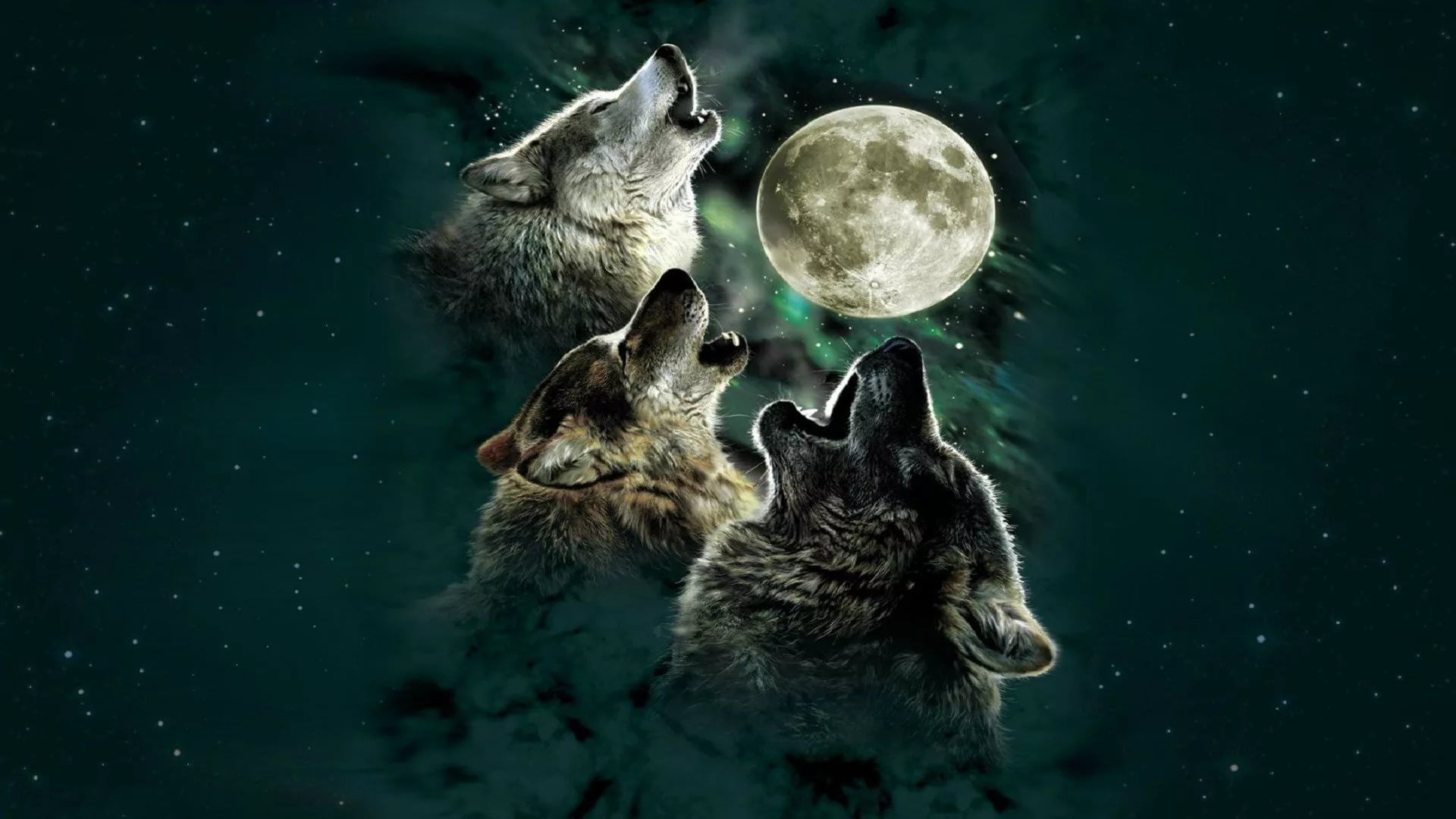 Cool Wolf hd wallpaper for laptop