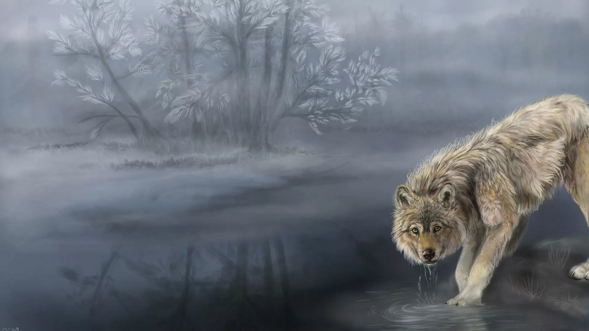 Cool Wolf wallpaper picture hd