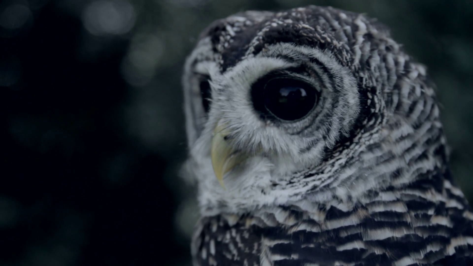 Cute Owl full hd wallpaper for laptop