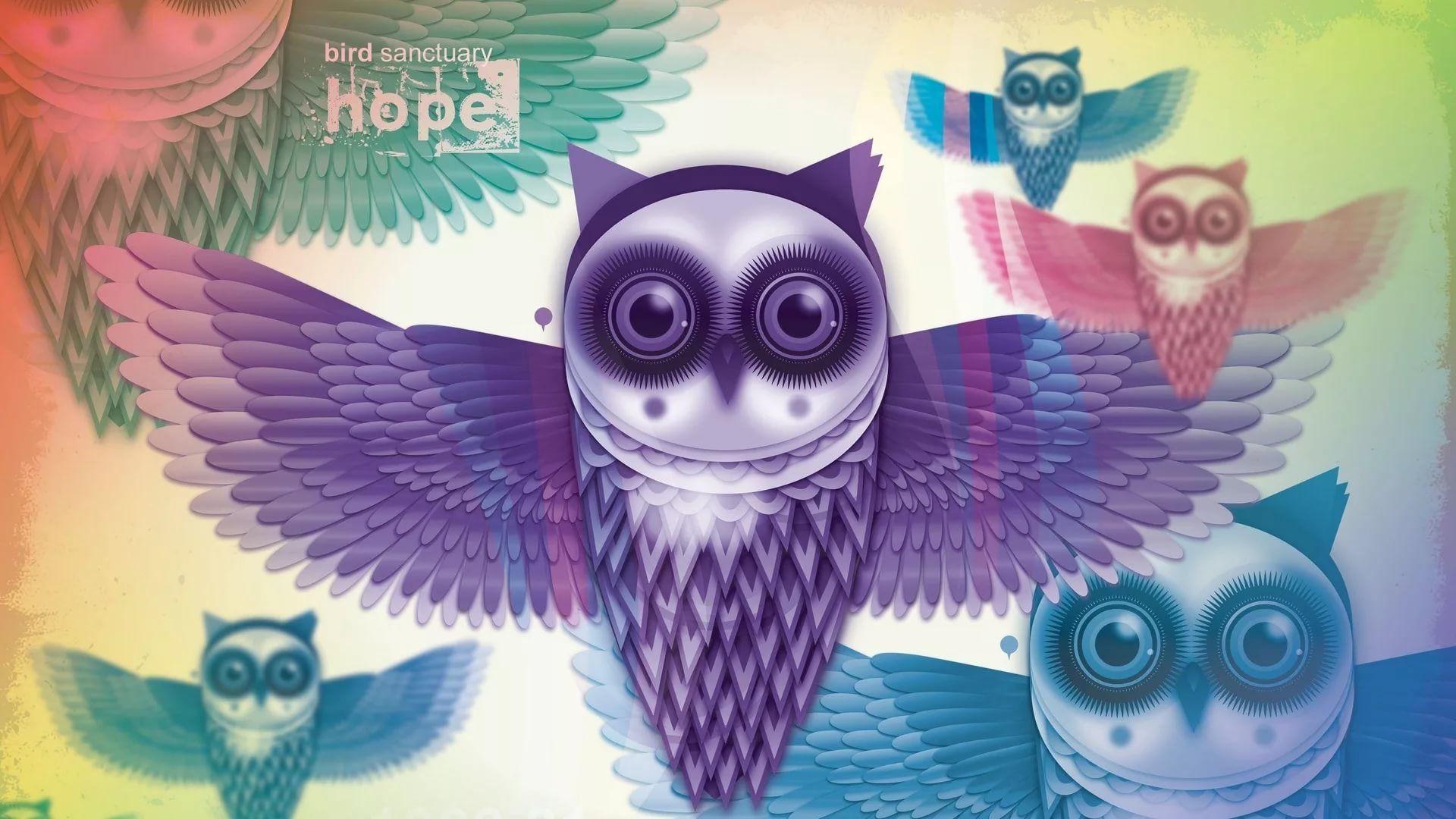 Cute Owl wallpaper image