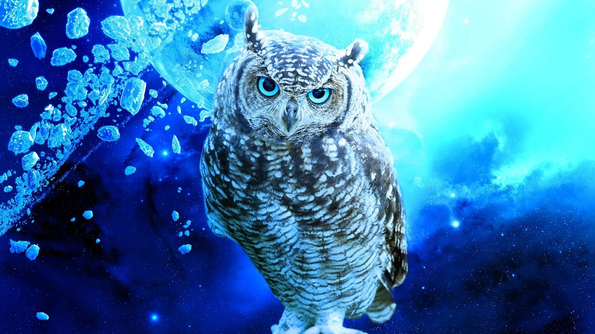 Cute Owl download free wallpaper image search