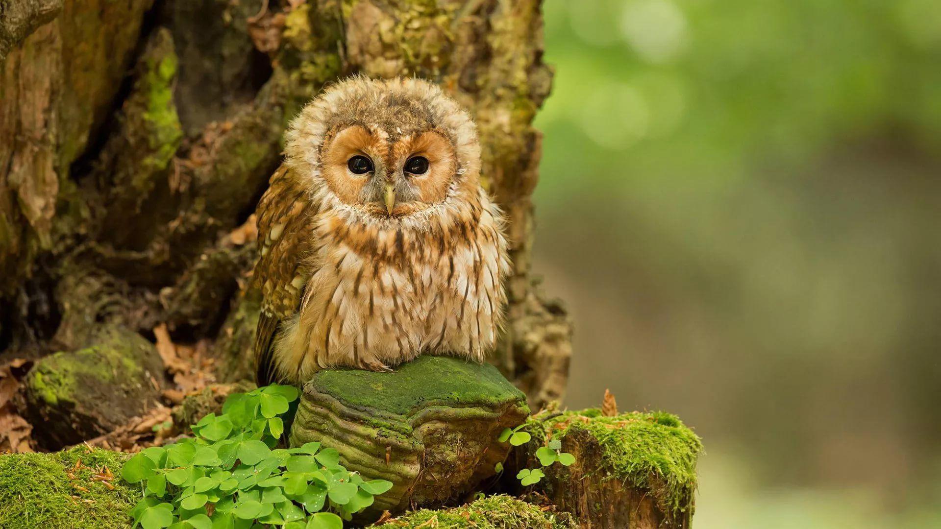 Cute Owl wallpaper photo hd