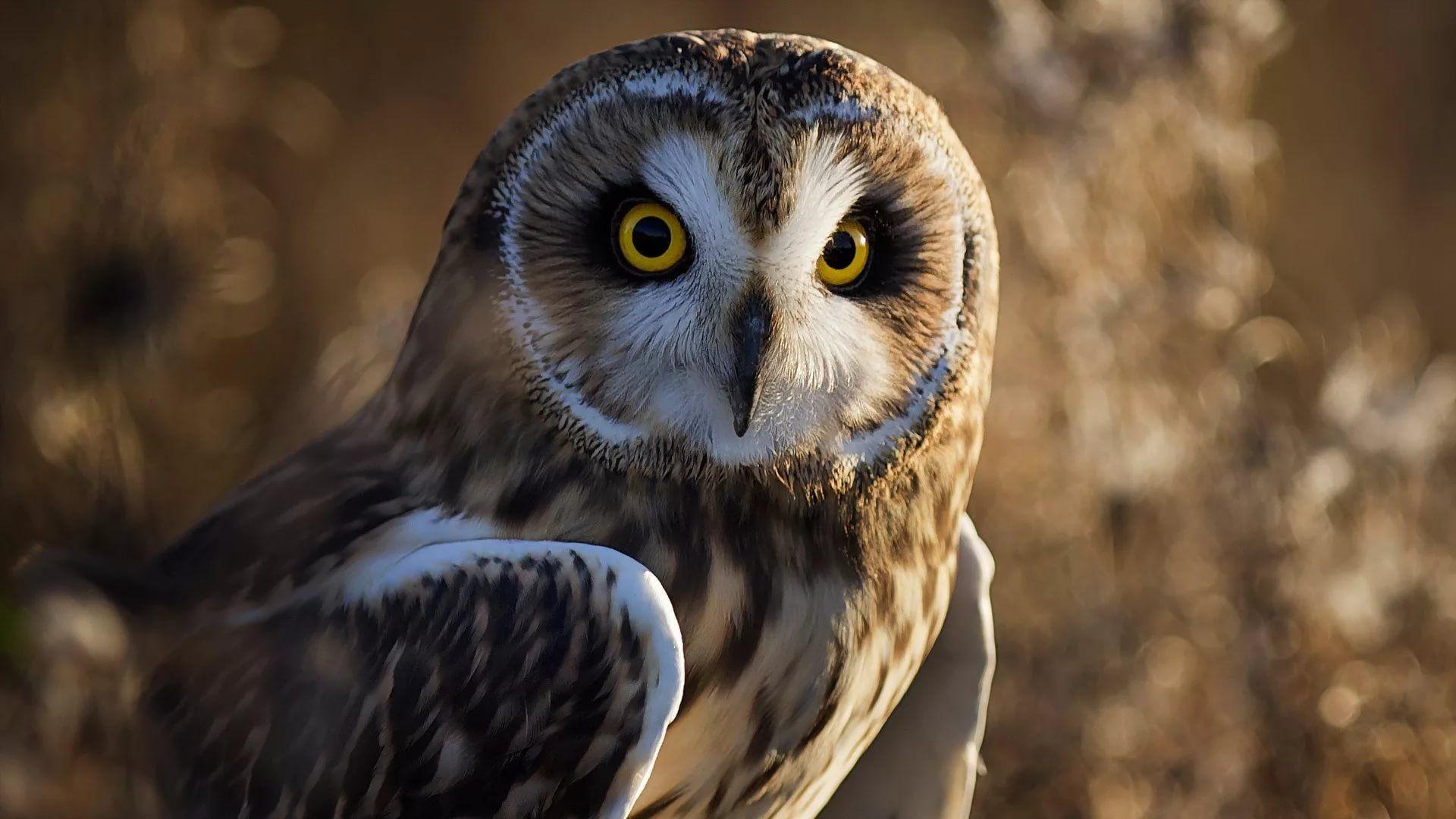 Cute Owl wallpaper picture hd