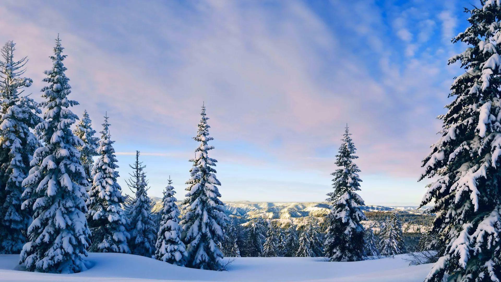 Cute Winter Pic