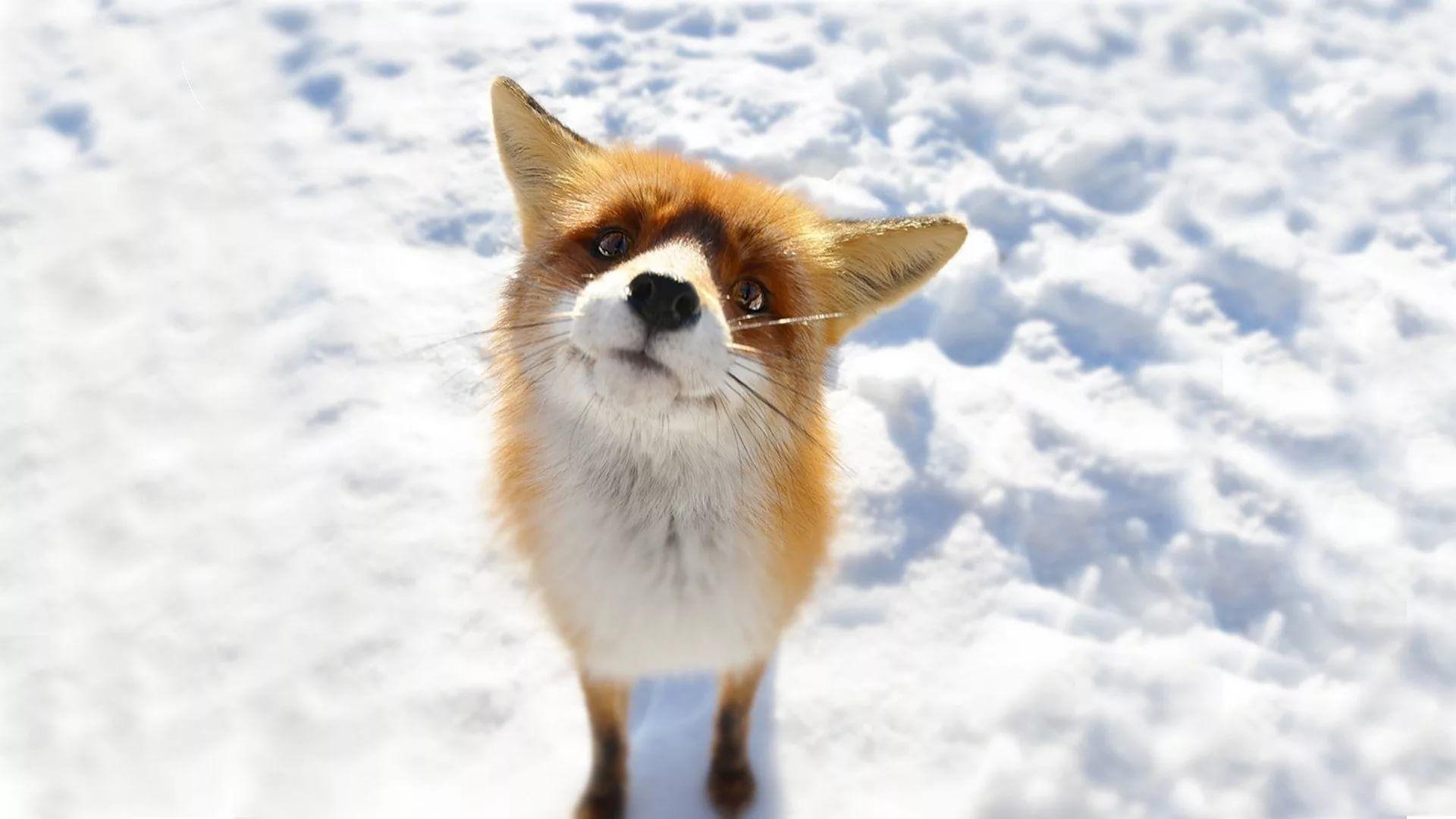 Cute Winter wallpaper photo