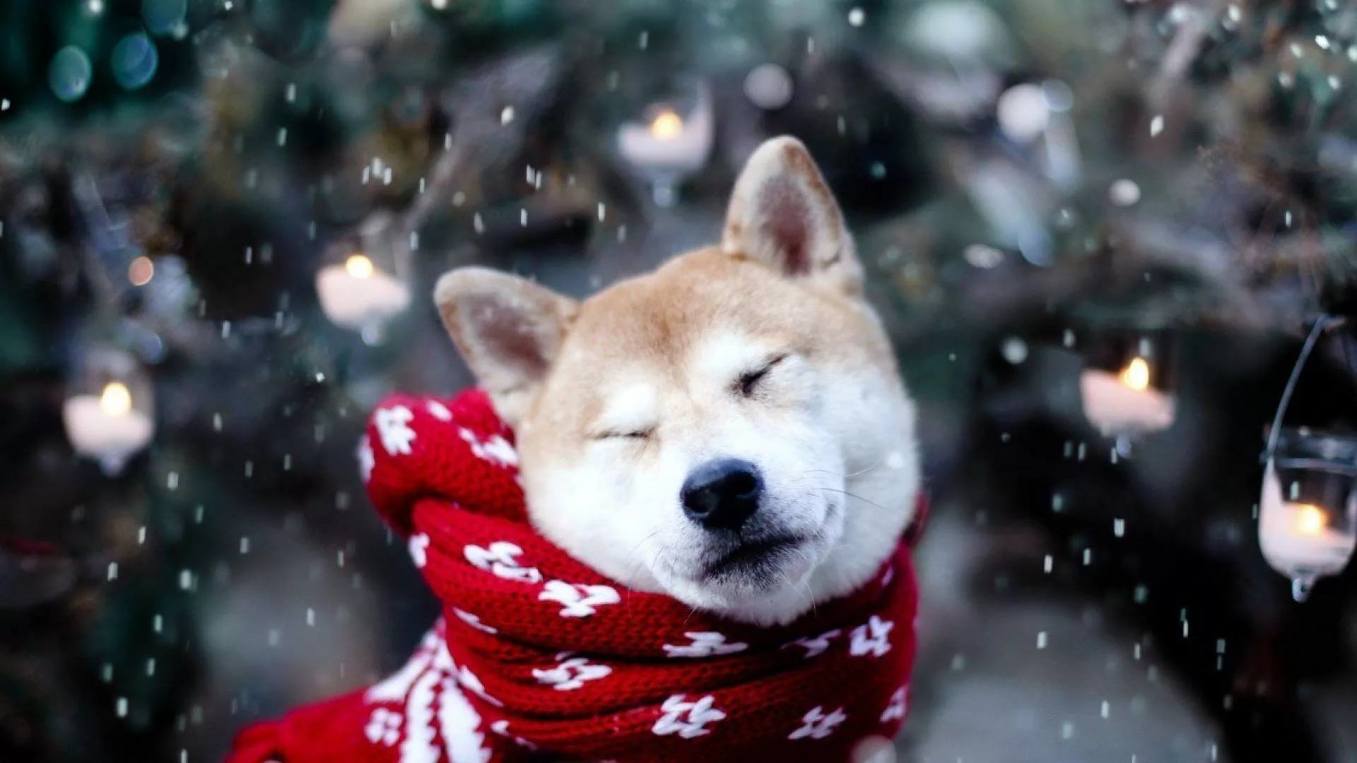 Cute Winter wallpaper picture hd