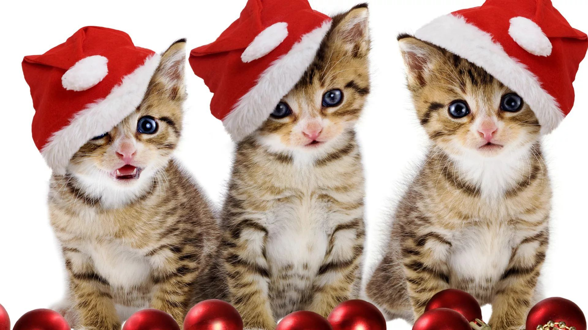 Funny Christmas Wallpaper and Background