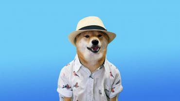 Meme 1080p Wallpaper