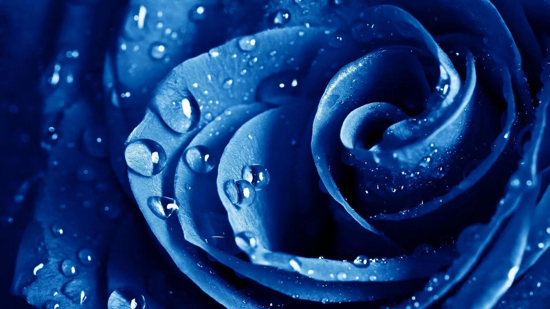Rose Screensaver laptop wallpaper