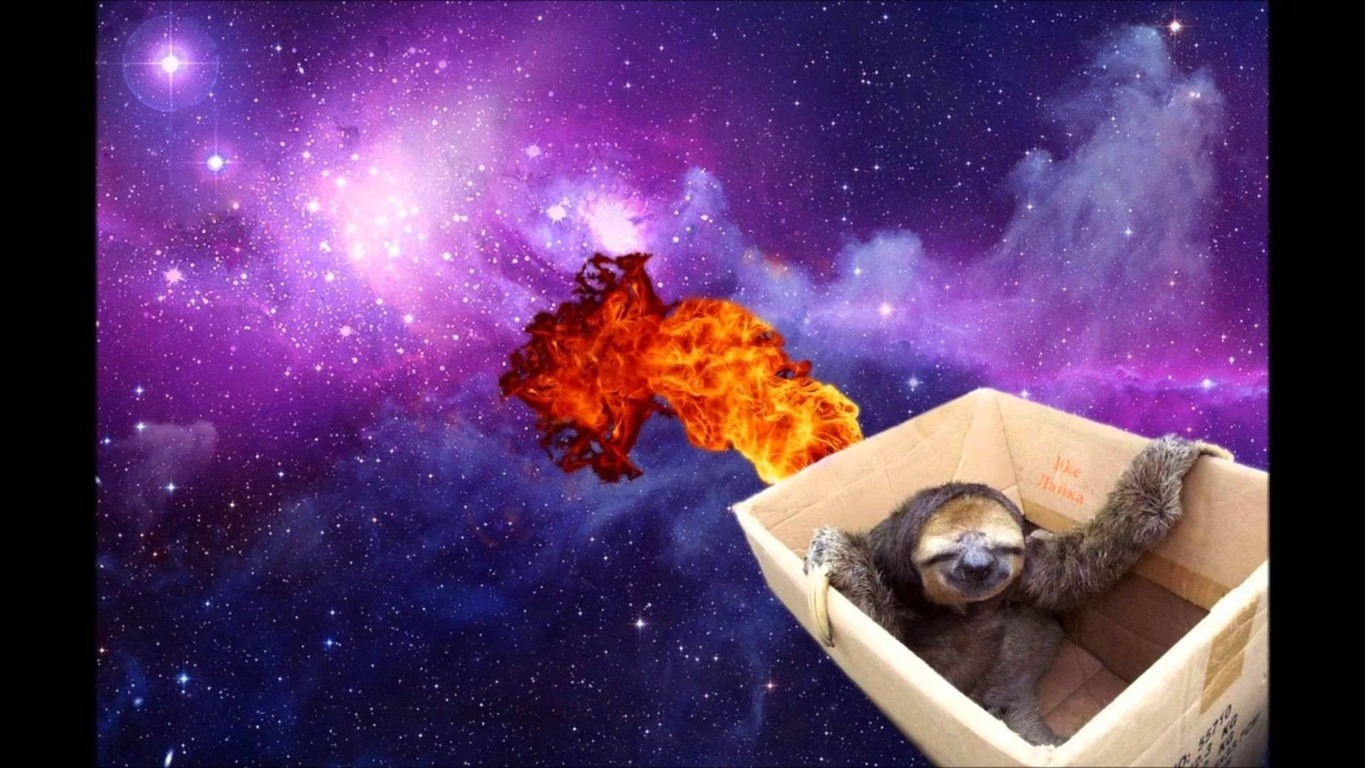 Sloth High Definition