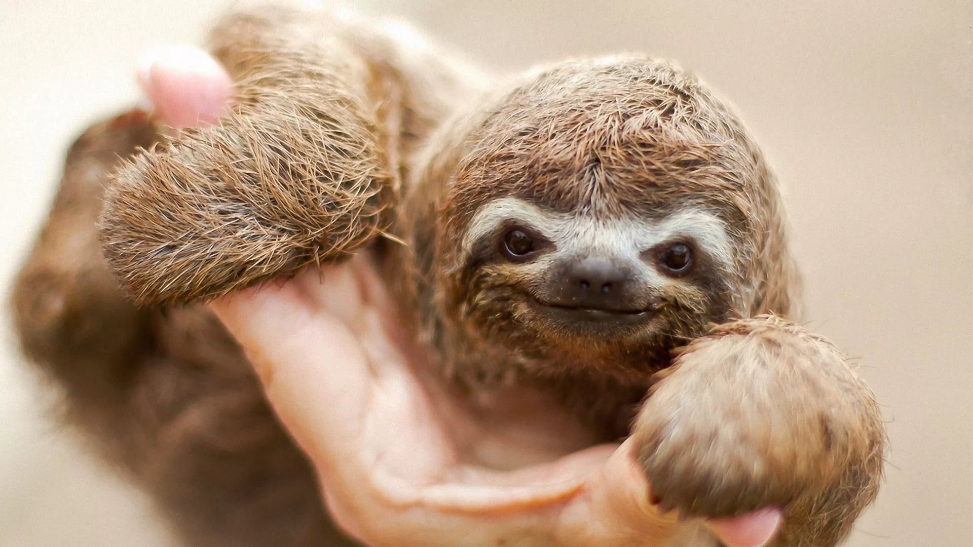 Sloth Picture