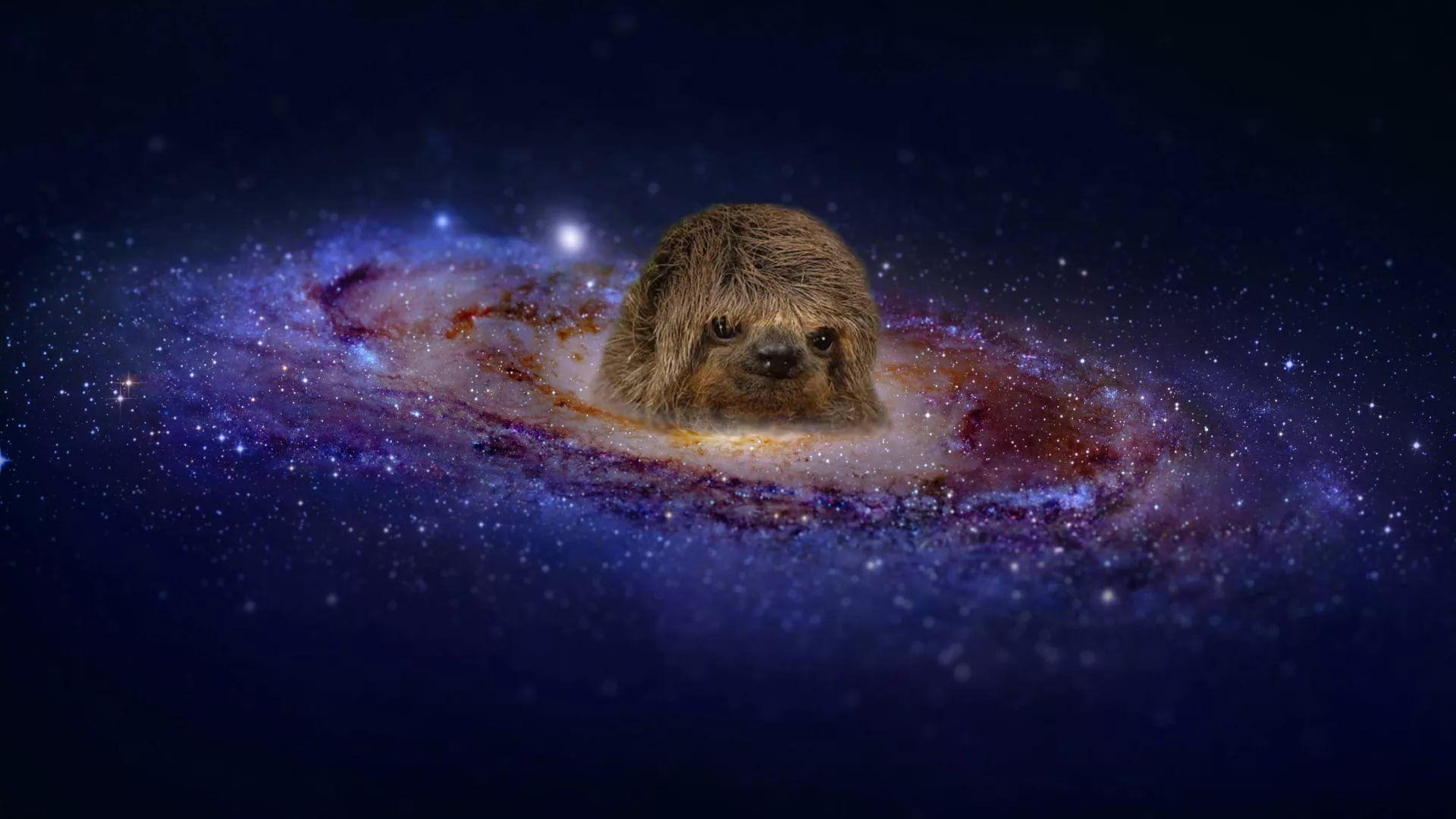 чем предадим картинки животные в космосе композиции
