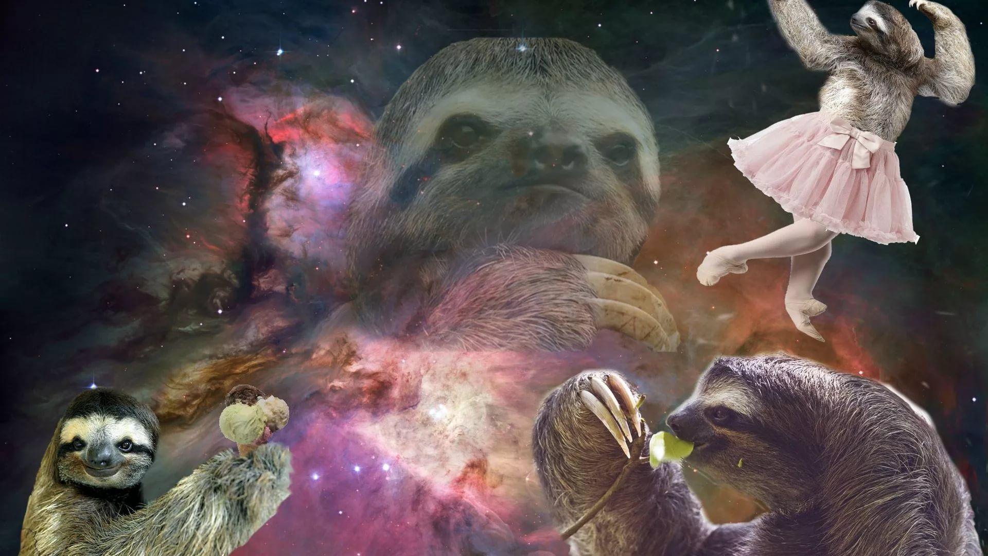Sloth laptop wallpaper