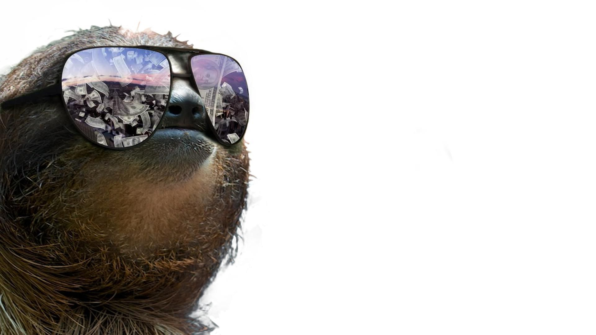 Sloth download free wallpapers for pc in hd