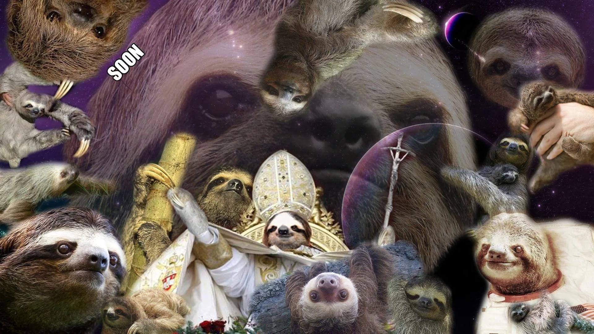 Sloth hd wallpaper 1080