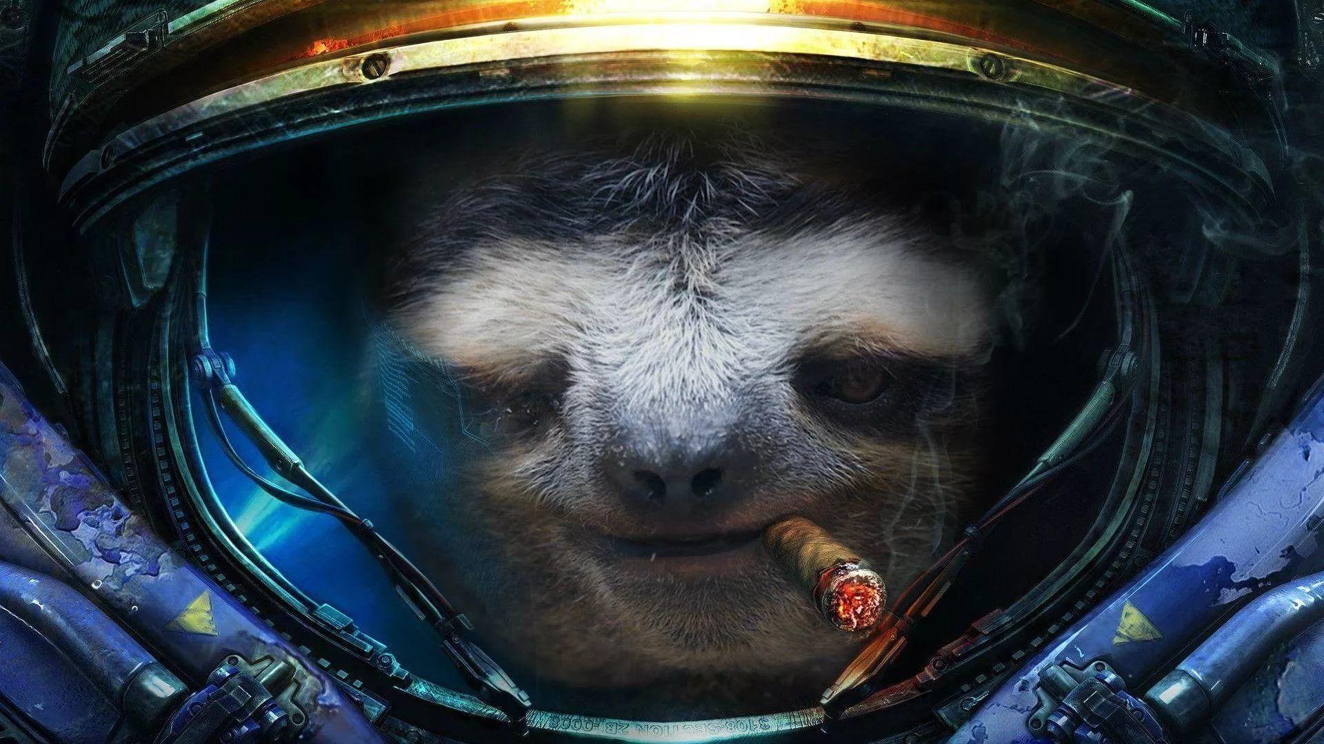 Sloth HD Wallpaper