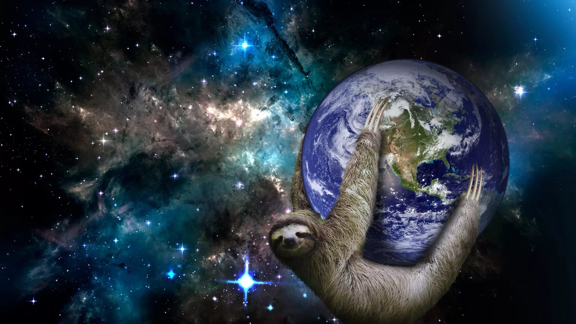 Sloth wallpaper photo full hd