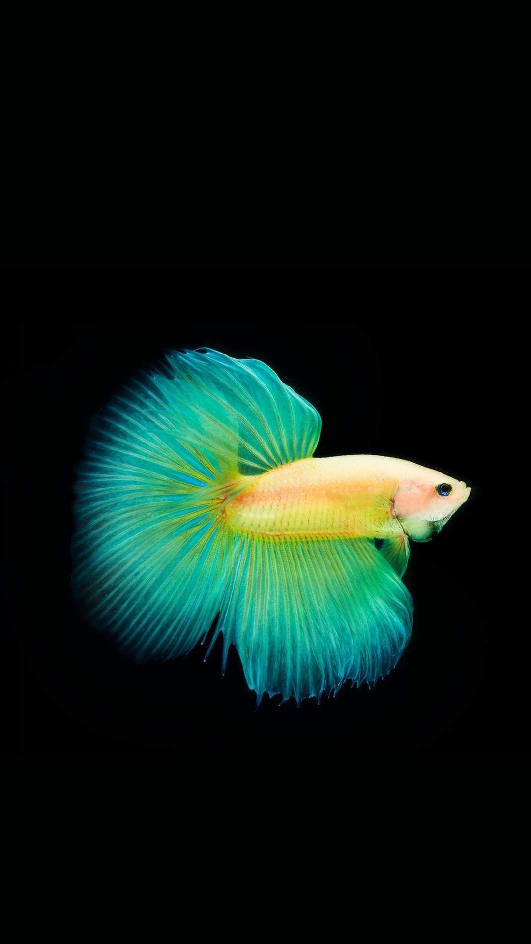 Betta Fish iPhone 5 wallpaper