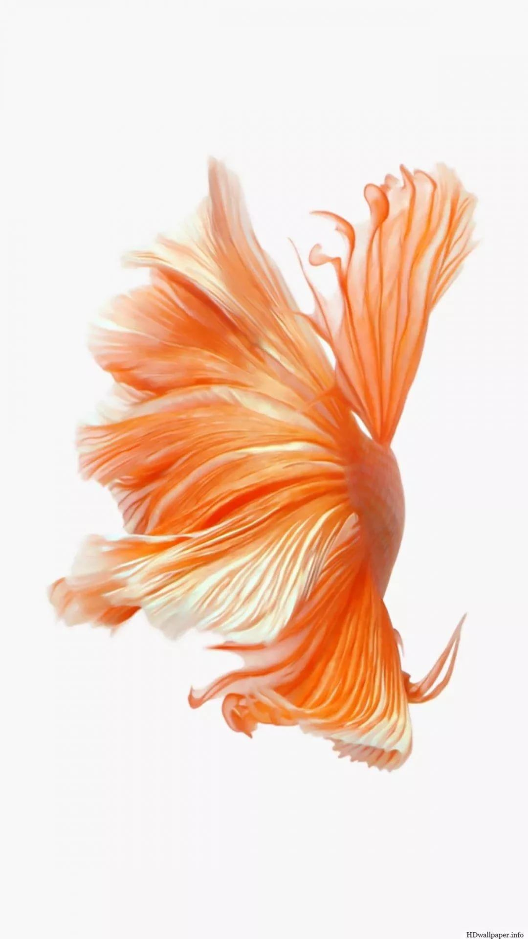 Betta Fish wallpaper for android