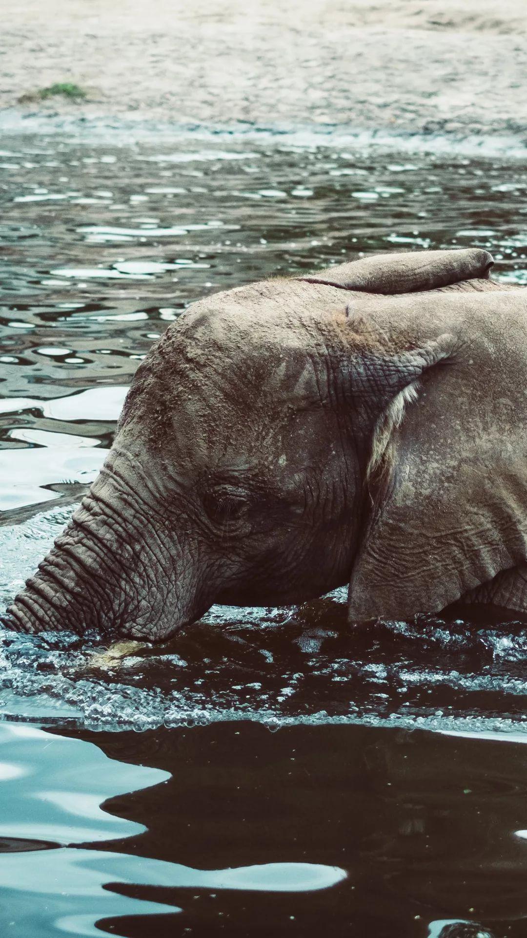 Elephant Tumblr wallpaper