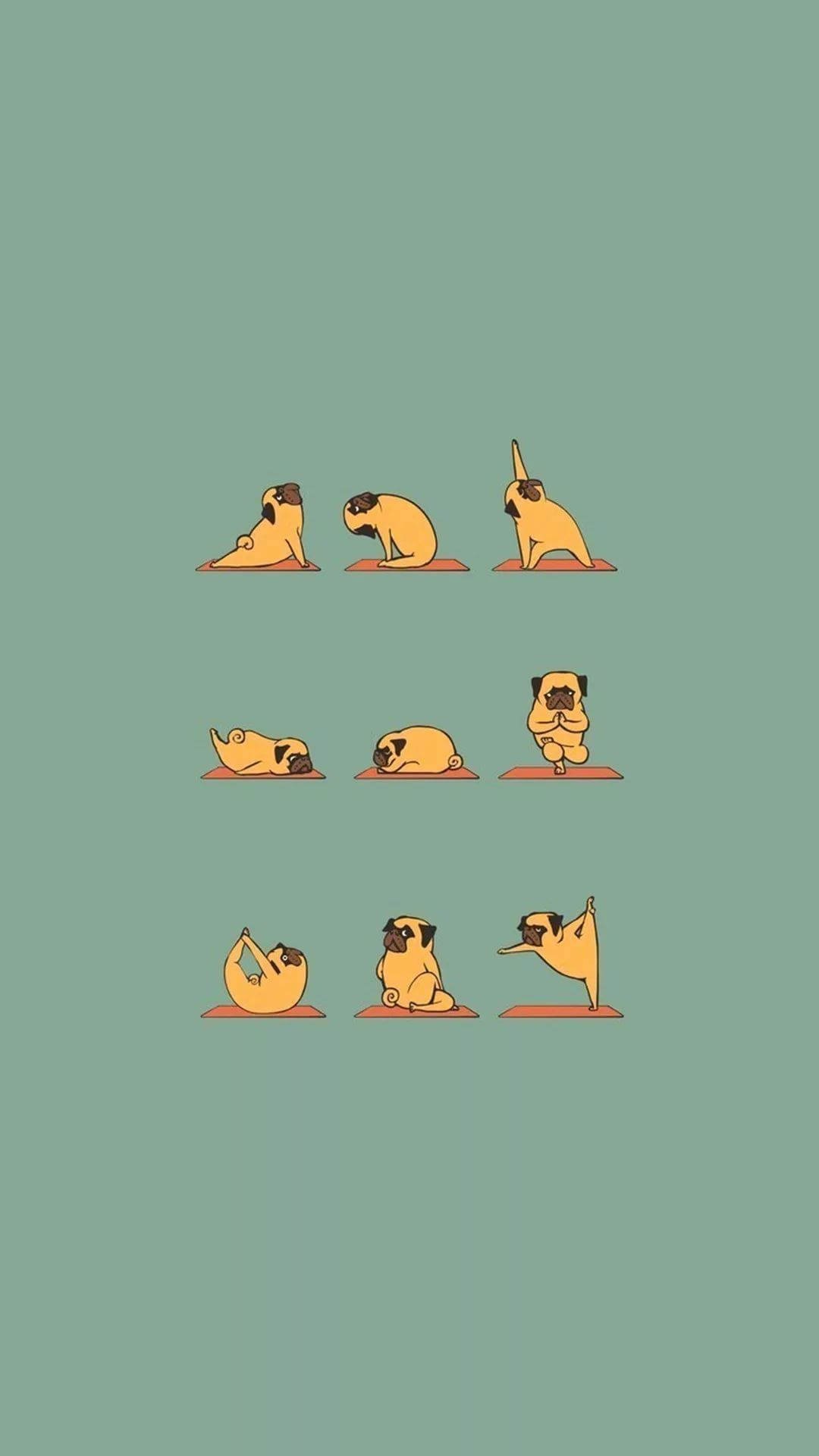 Pug wallpaper for iPhone