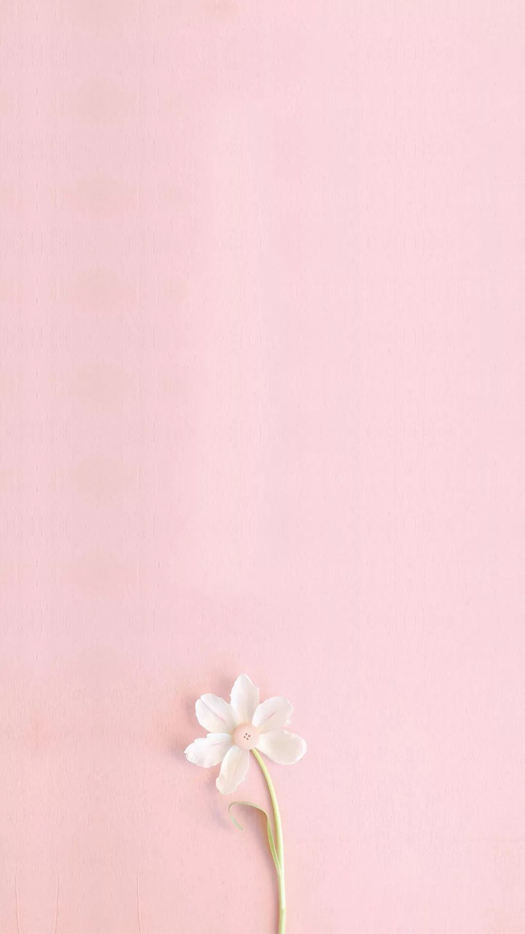20 Solid Pink Iphone Wallpapers Wallpaperboat