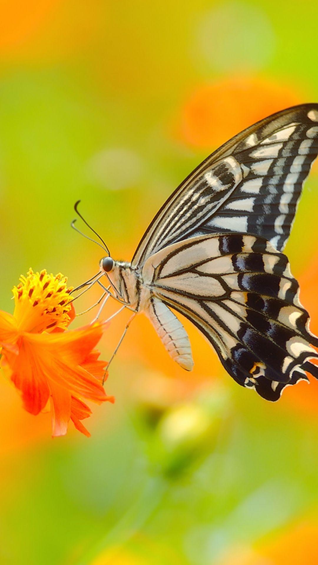 Animal Butterfly Mobile Wallpaper