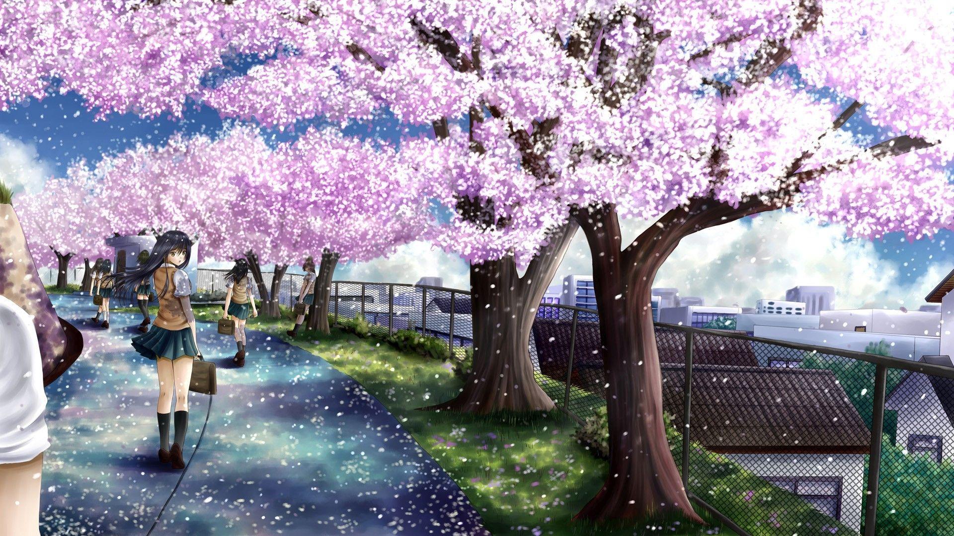 Anime Cherry Blossom Desktop Wallpaper