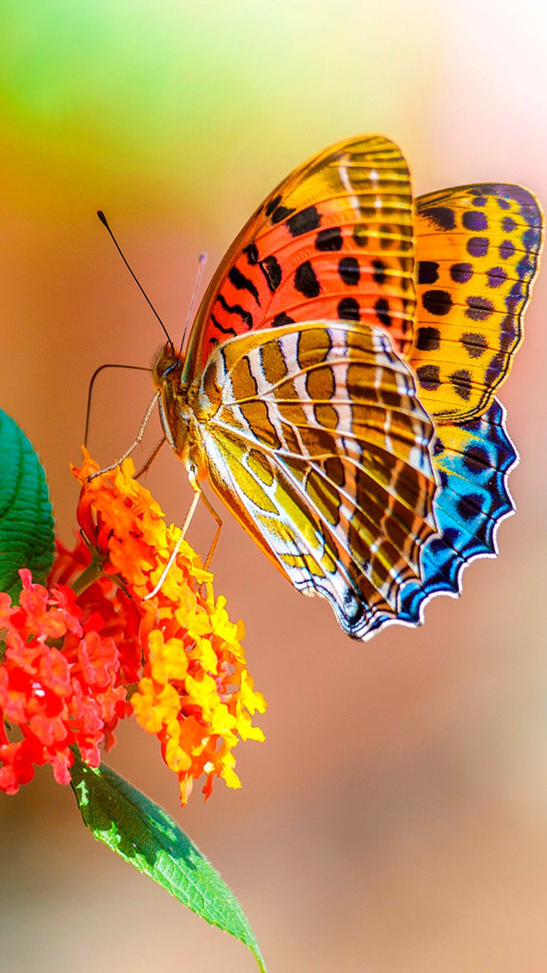 Colorful Animated Butterfly Wallpaper For