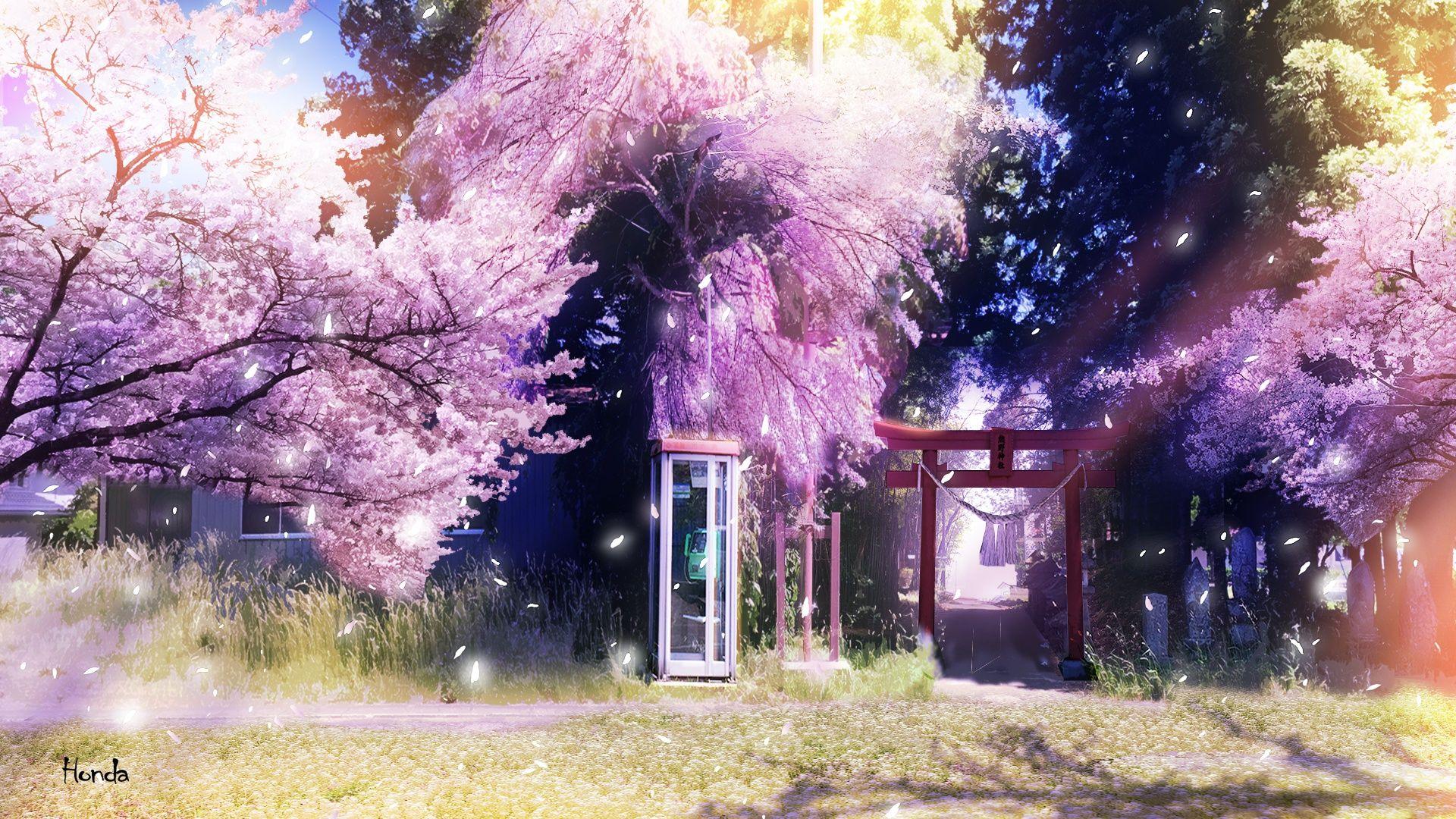 Download Wallpaper Spring, Sakura, Telephone Booth, Torii, Section Art In Solution