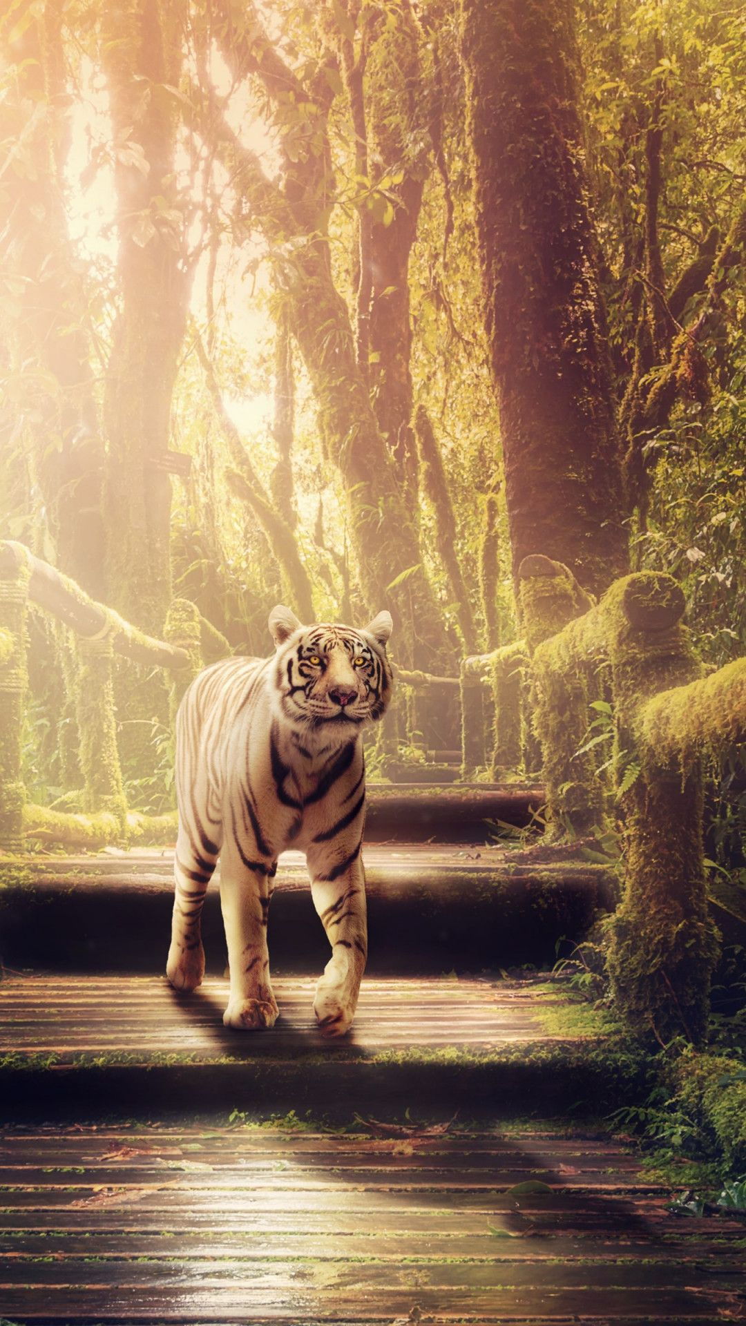 Download The The Tiger Of Jungle Wallpaper Inresolution For Use