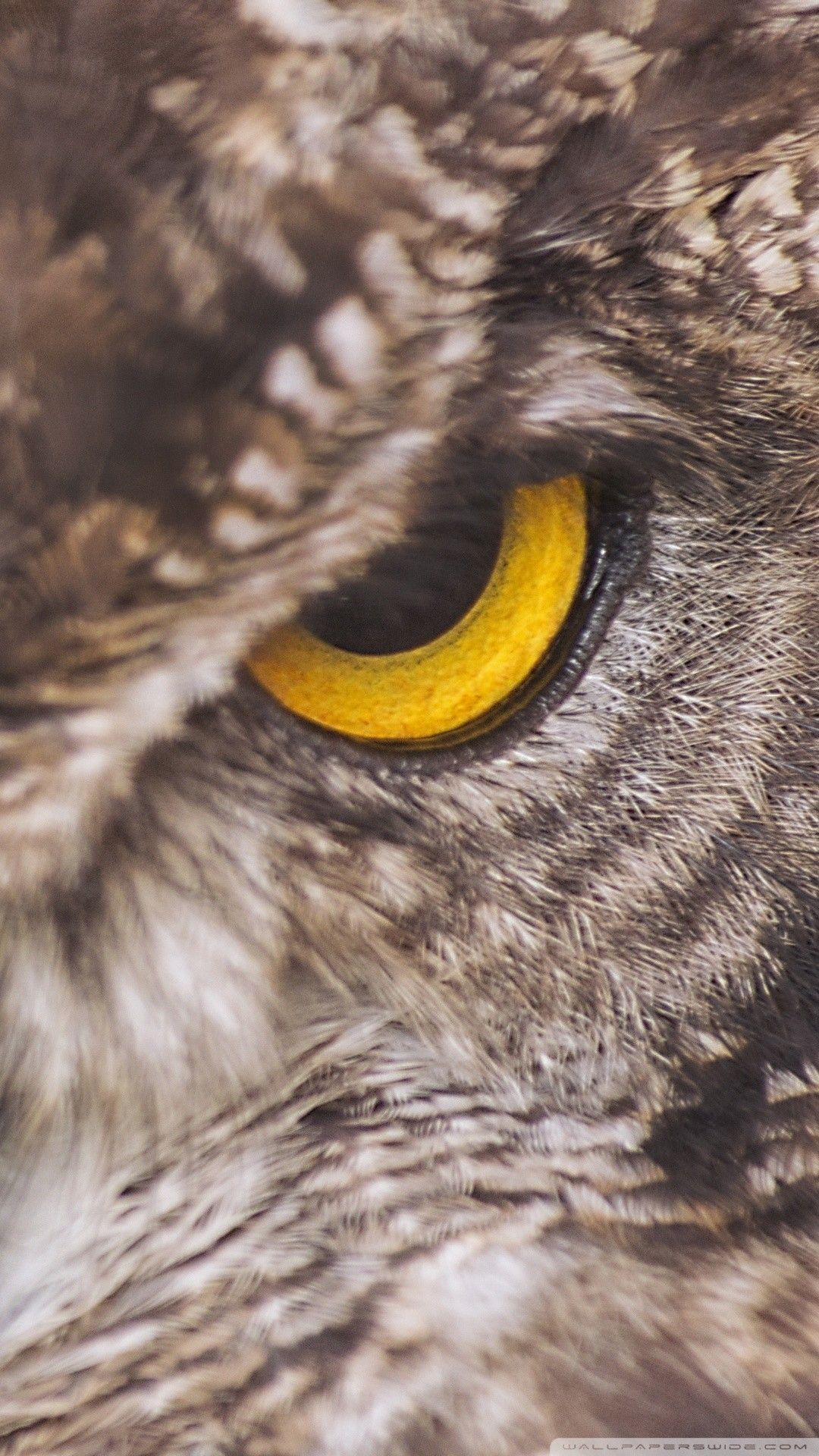 Eagle Owl Phone Wallpaper By Smdrcsd