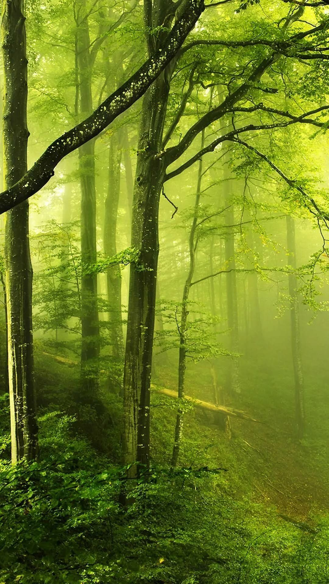 Fantasy Green Forest Iphone Plus Hd Wallpaper Hd Free