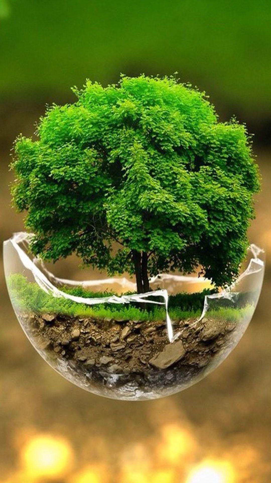 Herb Plant Vascular Plant Thyme Background, Parsley, Pot, Leaf, Backgrounds