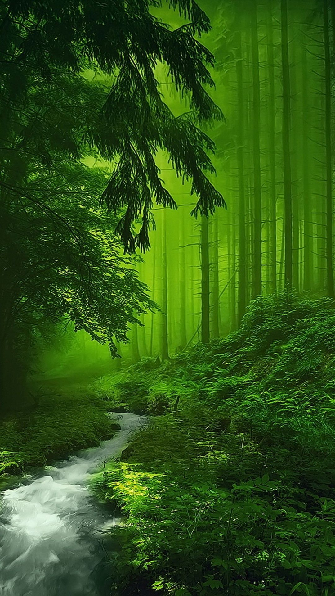 Pictures Of Beautiful Mystical Forest Rockcafe