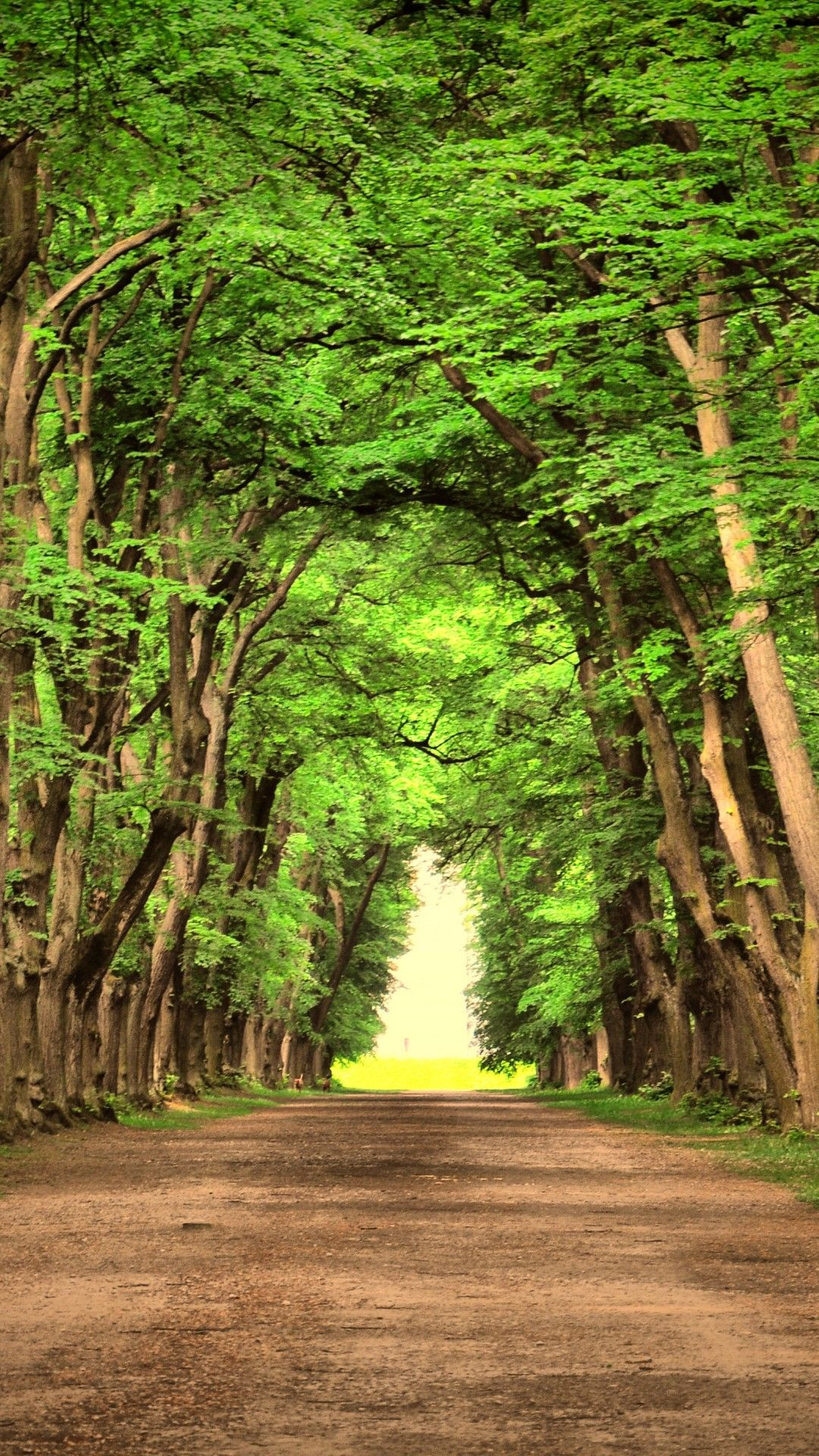 Scenic Path In The Woods Wallpaper Wallpaper D
